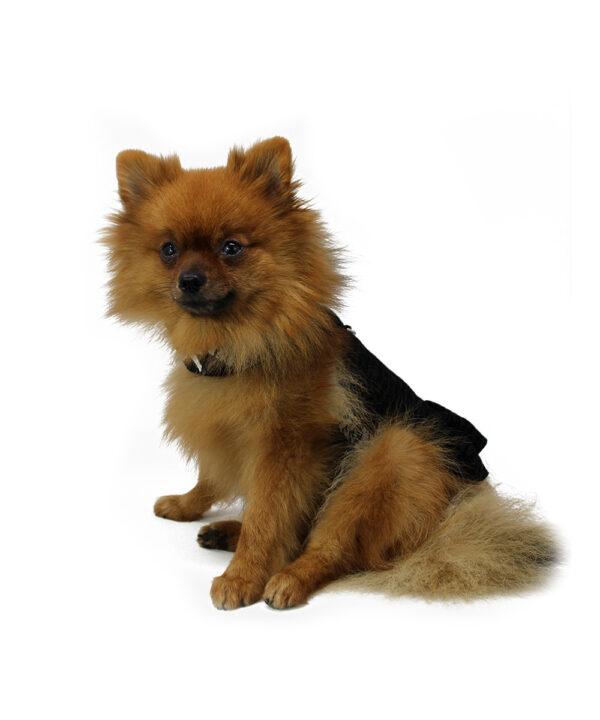 Harness Words Girl royaldog